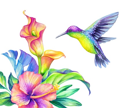 watercolor illustration, exotic nature, flying humming bird, tropical calla lily flowers, green jungle leaves, isolated on white background