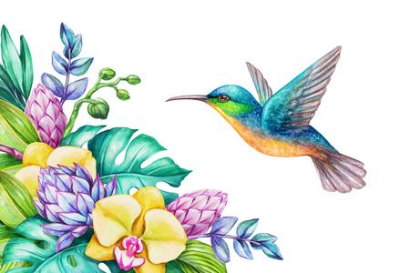 Aquarel illustratie, exotische natuur, vliegende zoemende vogel, tropische orchidee bloemen, groene jungle bladeren, geïsoleerd op witte achtergrond