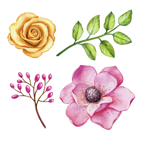 watercolor illustration, rose, assorted flower collection, floral design elements isolated on white background