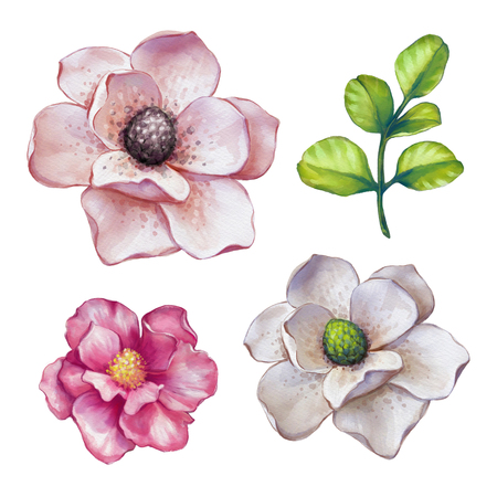 watercolor illustration, magnolia, assorted flower collection, floral design elements isolated on white background Stock Photo