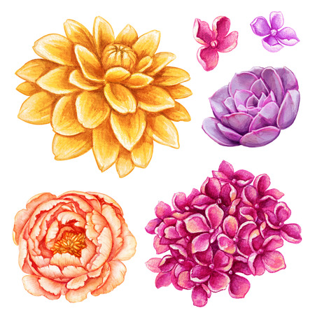 dahlia: watercolor illustration, assorted flower collection, floral design elements isolated on white background