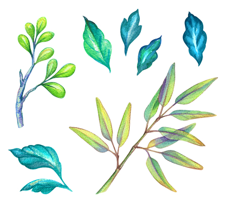 watercolor illustration, green leaves collection, foliage, floral design elements isolated on white background