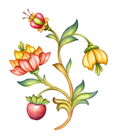 watercolor illustration, red tulip flower, green leaves, apple fruit, antique design element, medieval floral ornament, vintage pattern, clip art isolated on white background