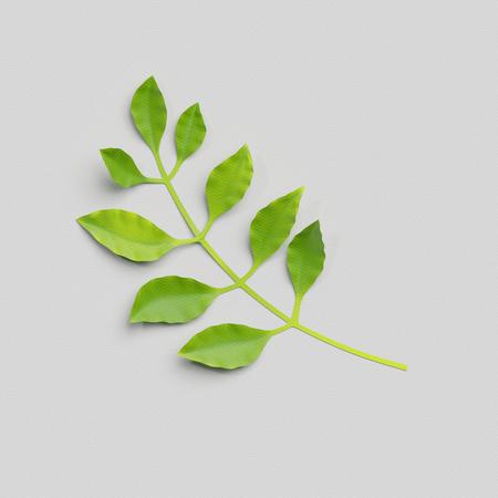 decoration: 3d render, paper cut decor, green tropical leaf, isolated botanical clip art element