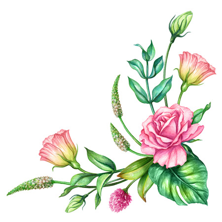 watercolor botanical illustration, pink rose flowers, tropical green leaves, floral bouquet, corner decoration, isolated on white background Stock Photo