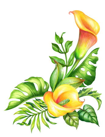 watercolor botanical illustration, wild yellow tropical flowers, jungle green leaves, calla lily floral corner decor, isolated on white background