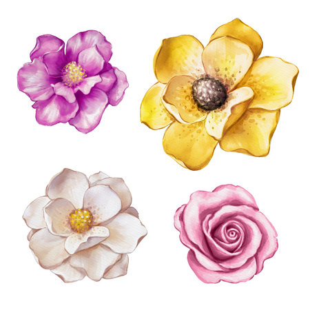 watercolor illustration, magnolia, rose, assorted flower collection, floral design elements isolated on white background