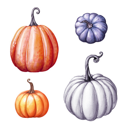 watercolor illustration, autumn pumpkins set, fall, Halloween or Thanksgiving clip art isolated on white background