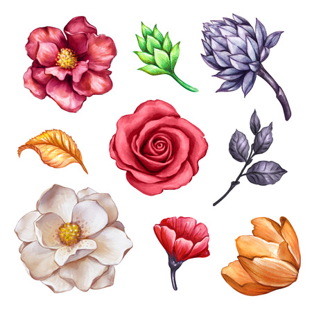 watercolor floral set, autumn flowers, rose, tulip, leaves, succulent, fall, botanical clip art isolated on white background