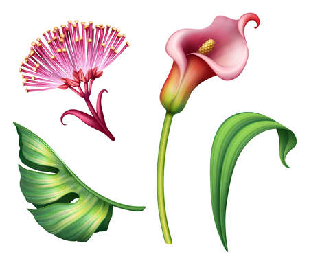 digital botanical illustration of assorted tropical leaves and flowers clip art elements isolated on white background