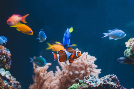 Aquarium colourfull different fishes in deep blue water Stock Photo - 115529562