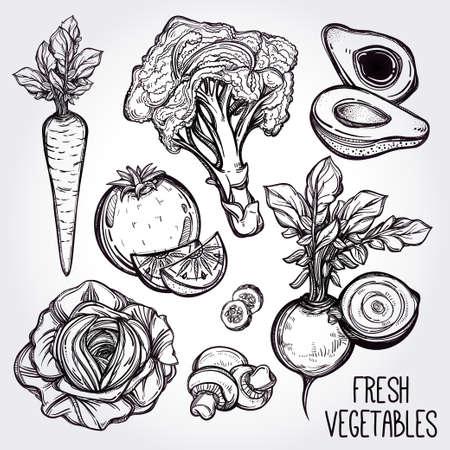 vegetable cook: Garden vegetables set vintage linear style. Isolated illustration. Hand drawn retro symbols of assorted veges. Perfect menu, garden farm, shop, market, organic, vegetarian vegan foods template.