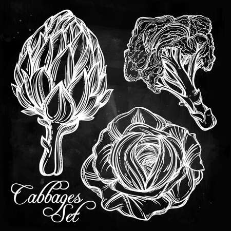 farm shop: Cabbage vegetables set vintage linear style. Isolated illustration. Hand drawn retro symbols of assortment Perfect menu, garden farm, shop, market, organic, vegetarian vegan foods template. Illustration
