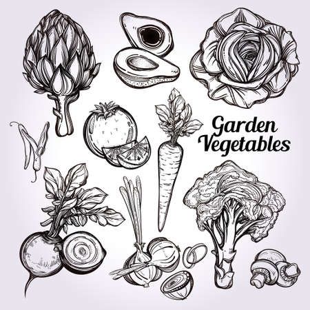 farmer: Garden vegetables set vintage linear style. Isolated illustration. Hand drawn retro symbols of assorted veges. Perfect menu, garden farm, shop, market, organic, vegetarian vegan foods template.