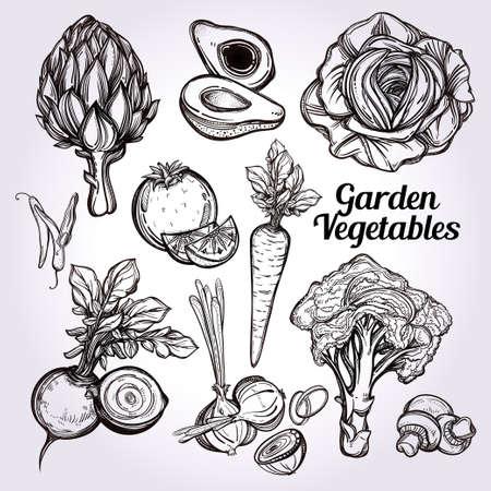 farmers' market: Garden vegetables set vintage linear style. Isolated illustration. Hand drawn retro symbols of assorted veges. Perfect menu, garden farm, shop, market, organic, vegetarian vegan foods template.