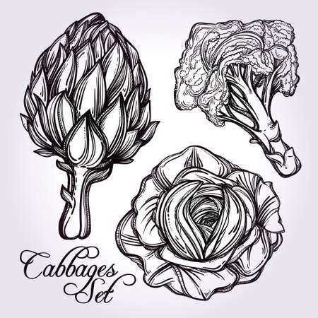 artichoke: Cabbage vegetables set vintage linear style. Isolated illustration. Hand drawn retro symbols of assortment Perfect menu, garden farm, shop, market, organic, vegetarian vegan foods template. Illustration