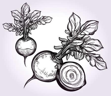 vegetable gardening: Beet vegetables set vintage linear style. Isolated illustration. Hand drawn retro symbols of assorted veges. Perfect menu, garden farm, shop, market, organic, vegetarian vegan foods template.