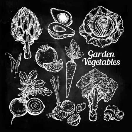 farm shop: Garden vegetables set vintage linear style. Isolated illustration. Hand drawn retro symbols of assorted veges. Perfect menu, garden farm, shop, market, organic, vegetarian vegan foods template.