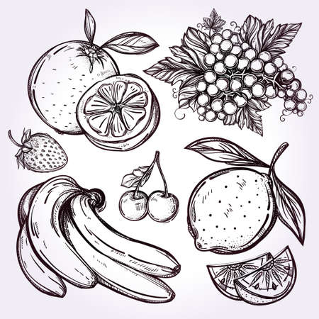 nectarine: Various fruits set vintage linear style. Isolated vector illustration. Hand drawn retro symbols of assorted fruits, berries.