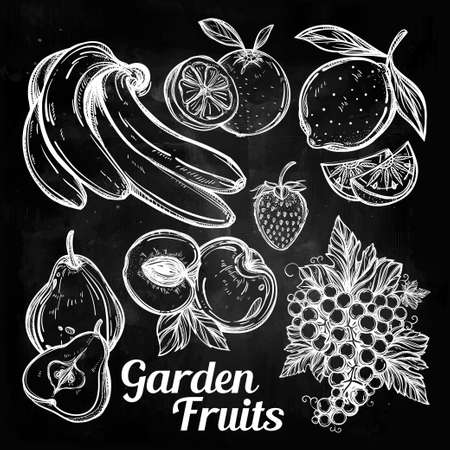 blackboard: Various fruits set vintage linear style. Isolated vector illustration. Hand drawn retro symbols of assorted fruits, berries.