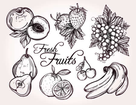 orange fruit: Various fruits set vintage linear style. Isolated vector illustration. Hand drawn retro symbols of assorted fruits, berries.