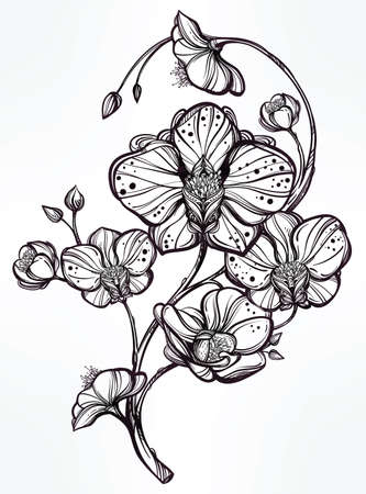 black and white image drawing: Vintage floral highly detailed hand drawn orchid flower stem with buds and petals. Beautiful motif, tattoo design element. Book concept art. Isolated vector illustration in line art style.
