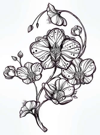 orchidee: Vintage floreale altamente dettagliato disegnato a mano fiore di orchidea gambo con boccioli e petali. Bella motivo, tatuaggio elemento di design. Prenota concept art. Isolata illustrazione vettoriale in stile art linea.