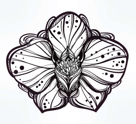 orchid: Vintage floral highly detailed hand drawn orchid flower stem with buds and petals. Beautiful motif, tattoo design element. Book concept art. Isolated vector illustration in line art style.
