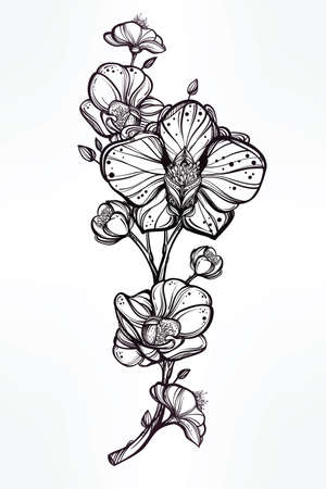 orchids: Vintage floral highly detailed hand drawn orchid flower stem with buds and petals. Beautiful motif, tattoo design element. Book concept art. Isolated vector illustration in line art style.