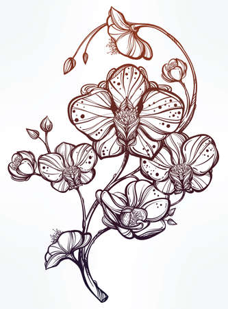 orchid isolated: Vintage floral highly detailed hand drawn orchid flower stem with buds and petals. Beautiful motif, tattoo design element. Book concept art. Isolated vector illustration in line art style.