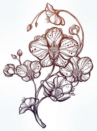 Fleur D Orchidee Dessin Idee D Image De Fleur