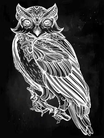 nocturnal animal: Highly detailed hand drawn Owl design vintage style. Vector illustration isolated.