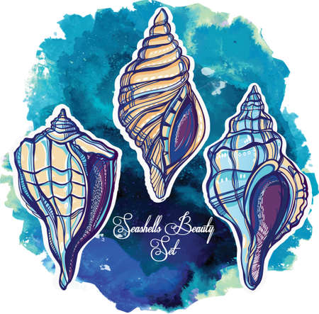 marine aquarium: Hand drawn beautiful collection set of seashells. Isolated on watercolor. Vector illustration. Vintage sea marine life, scallop, mollusks sign. Group. Elegant summer decoration background.