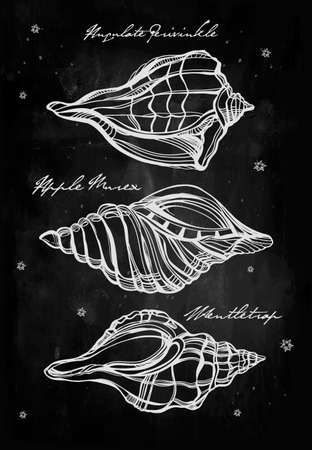 summer sign: Hand drawn beautiful collection set of seashells. Isolated on watercolor. Vector illustration. Vintage sea marine life, scallop, mollusks sign. Group. Elegant summer decoration background.