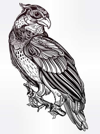 black beak: Detailed hand drawn bird of prey.