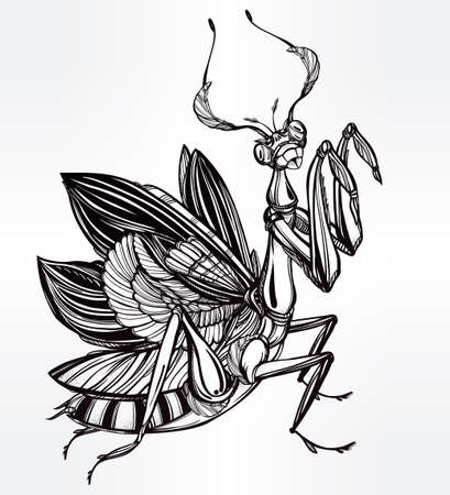 mantis: Beautiful hand drawn Mantis beetle. Vintage style tattoo vector art. Isolated vector illustration. Print design. Linear decoration.