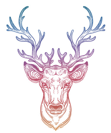 Deer head with beautiful antlers, hand drawn vintage illustration.