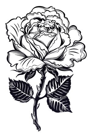 Vintage floral hand drawn rose with leaves in flash tattoo style. Illustration