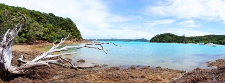 new zealand beach: Panorama of a bare tree on a bay with blue tranquil waters. Taken on Urupukapuka Island in New Zealand.