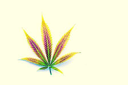 Natural rainbow mature cannabis, pot, marijuana leaf on off-white background