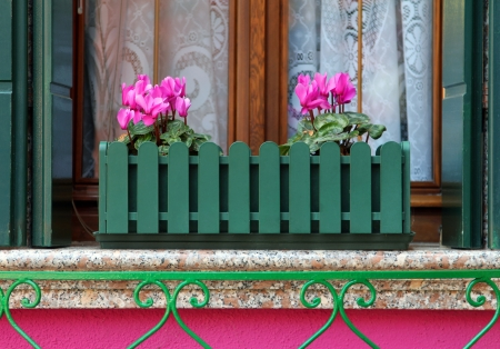 pink flowers on the windowsill photo