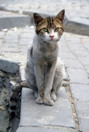 outcast: Homeless cat sitting on the street of European city Stock Photo