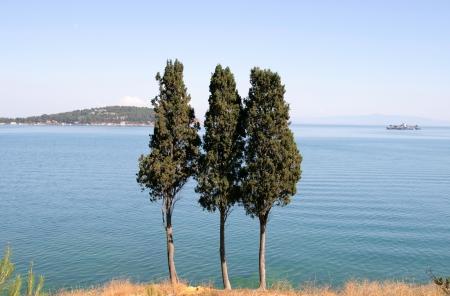 marmara: three trees on the shore of the Sea of Marmara Stock Photo