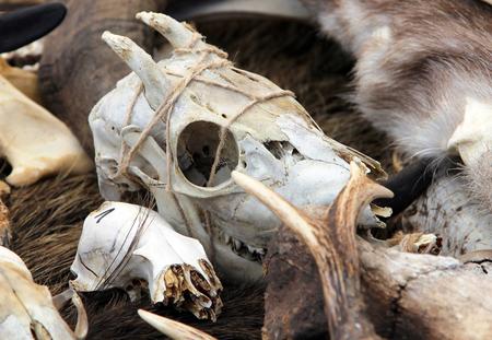 daemon: Goat skull at fair of artisans