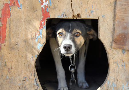 timorous: Frightened small dog in a kennel Stock Photo