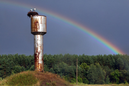 incubate: storks nest on the background of rainbow