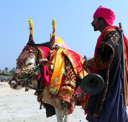 GOA, INDIA? 7 FEBBRAIO 2014: uomo indiano con santa mucca indiana decorato con stoffa colorata e gioielli sulla spiaggia di South Goa Editoriali