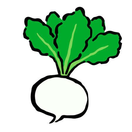 Illustration of Turnip: Illustration like hand drawn illustration with ink and brush