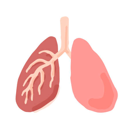 Human Lungs; Hand drawn vector illustration like woodblock print Ilustrace