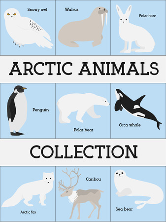 mammals: Arctic animals collection. Set of flat minimal vector illustrations of polar mammals and birds.Penguin, seal, hare, snowy owl, bear, orca whale, fox, caribou, walrus.Cute cards for memory game.Drawing